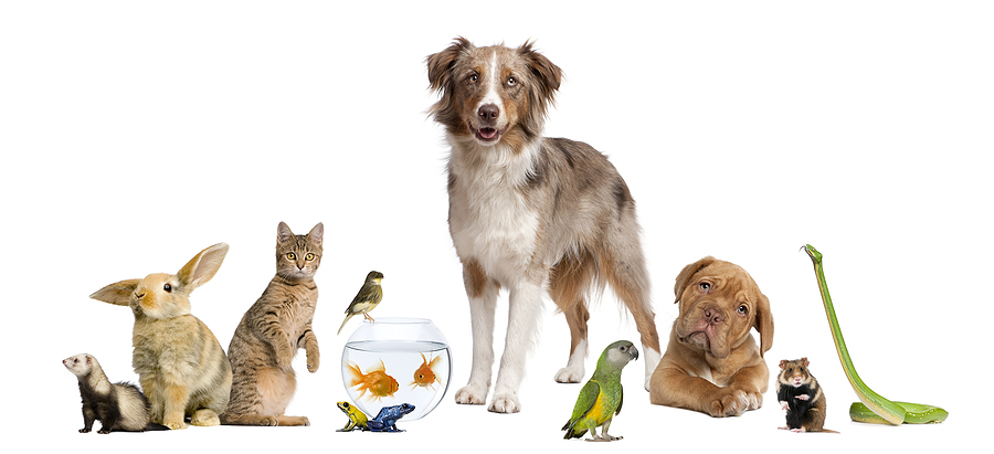 animal welfare and rescue groups earth angels   poochie au